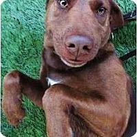 Adopt A Pet :: Emily - Mission Viejo, CA