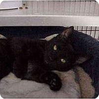 Adopt A Pet :: Inka - Deerfield Beach, FL