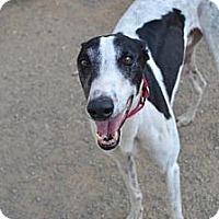 Adopt A Pet :: Ricky (Picky Ricky Lee) - Chagrin Falls, OH