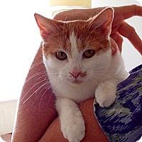 Adopt A Pet :: MyLinda - Tucson, AZ