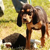 Adopt A Pet :: Mrs Butterworth - Brattleboro, VT