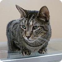Adopt A Pet :: Simon - Massapequa, NY