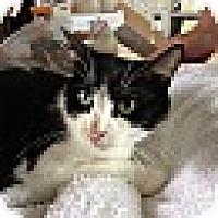 Adopt A Pet :: BW - Hamilton, ON