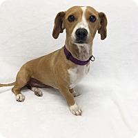 Adopt A Pet :: Pumpkin - Mission Viejo, CA