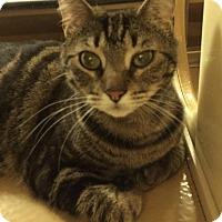 Adopt A Pet :: Zoe - Monroe, GA