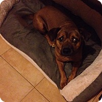 Adopt A Pet :: Bubu - San Diego, CA