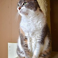 Adopt A Pet :: Maddie Mae - Santa Monica, CA