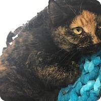 Adopt A Pet :: Brittany - Cumming, GA