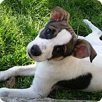 Adopt A Pet :: Hunter - Cat Spring, TX