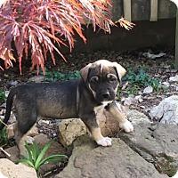Adopt A Pet :: Ted - Tulsa, OK