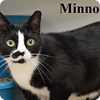 Adopt A Pet :: Minnow - Fryeburg, ME