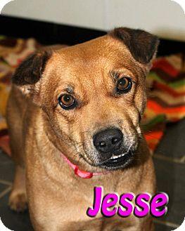 Shepherd (Unknown Type) Mix Dog for adoption in Midland, Texas - Jesse