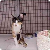 Adopt A Pet :: Candace & Lotus - Deerfield Beach, FL