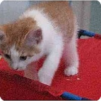 Adopt A Pet :: Paddy - Riverside, RI