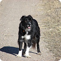 Adopt A Pet :: Joe - Alliance, NE