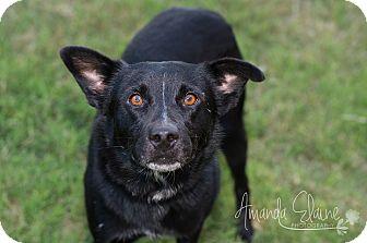 Labrador Retriever Mix Dog for adoption in Pilot Point, Texas - SIMON