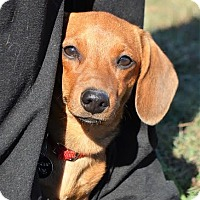 Adopt A Pet :: *Cecil - PENDING - Westport, CT