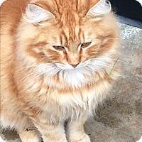 Adopt A Pet :: Scar - Roseburg, OR