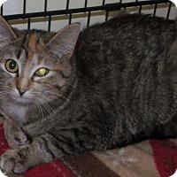 Adopt A Pet :: vixen - Muskegon, MI