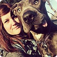 Adopt A Pet :: Pearl - Troy, MI