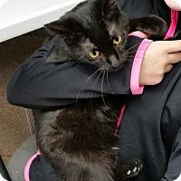 Adopt A Pet :: Bronte - Montgomery City, MO
