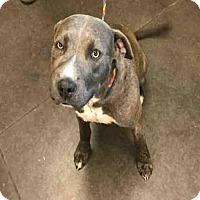 Adopt A Pet :: A029003 - Norman, OK