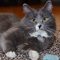 Adopt A Pet :: Grace Kelly - Edmonton, AB