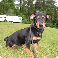 Adopt A Pet :: TriXie - Worcester, MA