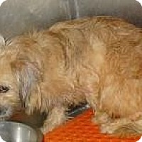 Adopt A Pet :: Remmie - Riverview, FL