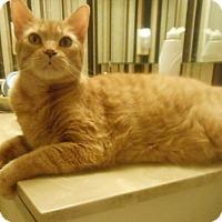 Adopt A Pet :: Friendly Fred - Reston, VA