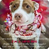 Adopt A Pet :: Princess Peach - Tonawanda, NY