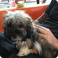 Adopt A Pet :: Lola Cameron - Austin, TX