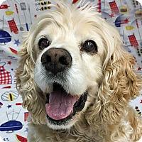 Adopt A Pet :: Harrison - Newington, VA
