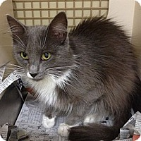 Adopt A Pet :: Malcolm - Troy, OH