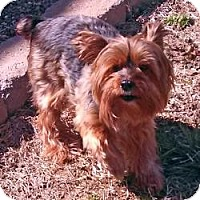 Adopt A Pet :: Ginger - Ashland City, TN