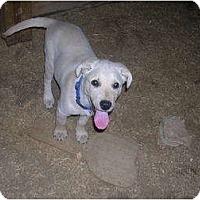 Adopt A Pet :: Elgin - Glastonbury, CT