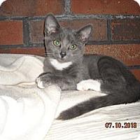 Adopt A Pet :: Milly #2 - Riverside, RI