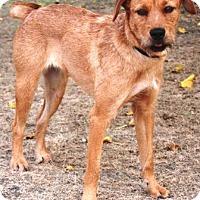 Adopt A Pet :: Butterbean - Gilbert, AZ