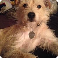 Adopt A Pet :: Corona - Bardonia, NY