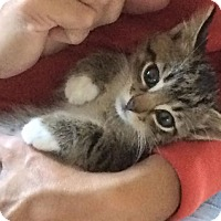 Adopt A Pet :: Rocky - Ogallala, NE