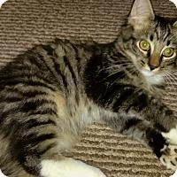 Adopt A Pet :: Motown Mo - McDonough, GA