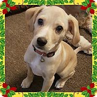 Adopt A Pet :: Eddie-ADOPTED! - Sacramento, CA