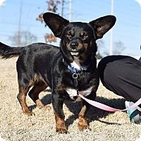 Adopt A Pet :: Libby - Homewood, AL