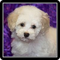 Adopt A Pet :: Chantilly - Covina, CA