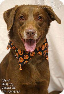 Labrador Retriever Mix Dog for adoption in Newnan City, Georgia - Fred
