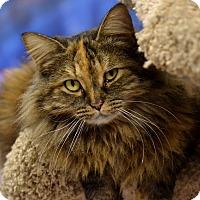 Adopt A Pet :: Kat - Byron Center, MI