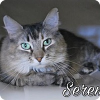 Adopt A Pet :: Serenity - Island Heights, NJ