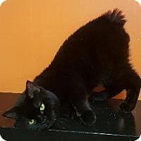 Adopt A Pet :: MORRIS - Pt. Richmond, CA
