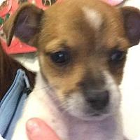 Adopt A Pet :: Tuxedo - Matawan, NJ