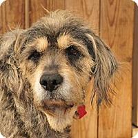 Adopt A Pet :: Bonita - Houston, TX